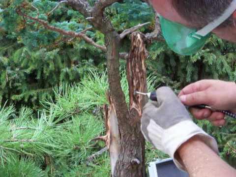 Bonsai Gestalten bonsai gestaltung scheinzypresse merlin sept.2009 - youtube
