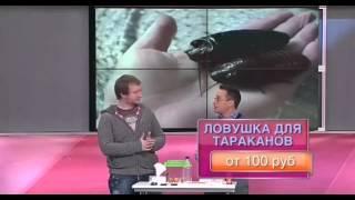 Дешево и сердито  Сюжет про борьбу с тараканами(, 2014-10-20T15:15:12.000Z)