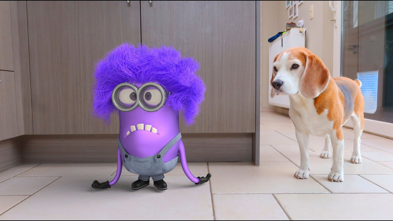 💜🍌 MINIONS IN REAL LIFE COMPILATION 6🍌💜