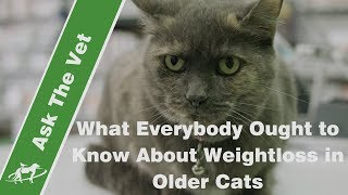 What Everybody Ought to Know About Weightloss in Older Cats- Companion Animal Vets