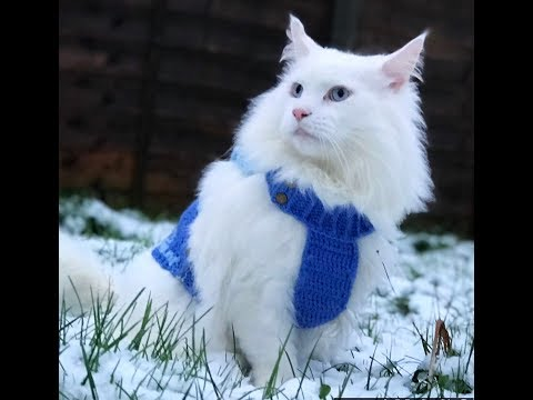 Mainecoon cat SnowDay!