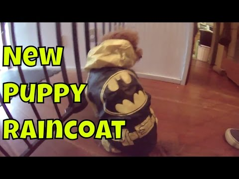 New Puppy Raincoat - Just Gin: Cutest Dog Ever! VOL. 14