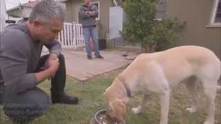 Why Did CESAR MILLAN Get Bite ?
