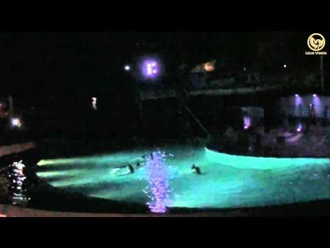 Zoo Aquarium de Madrid - Espectáculo de delfines (Noches del Zoo)