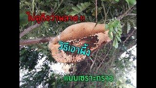 วิธีเอาผึ้ง แบบเซราะกราว