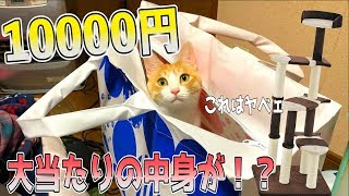 1万円の猫用福袋を開封したらとんでもない当たりが入っていた!!