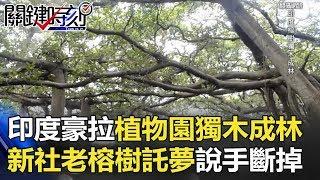 印度豪拉植物園「獨木成林」 新社老榕樹竟託夢說手斷掉了!? 關鍵時刻 20171114-6 王瑞德