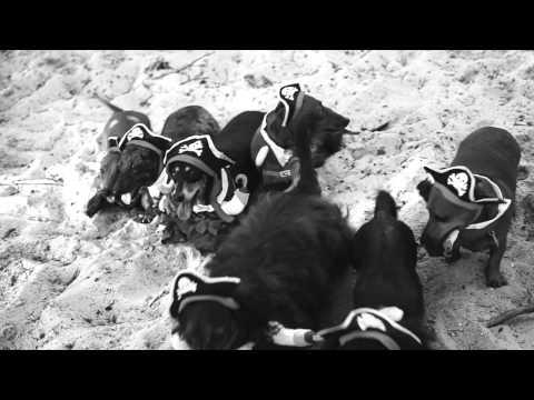 9 Cute Mini Dachshund Pirates! Arg!