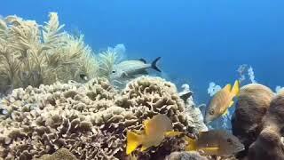 Under The Sea. Shark resting