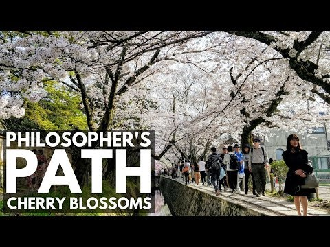 Philosopher's Path (Walk) Cherry Blossoms Kyoto | VEDA DAY 3 | Japan Vlog 45 | Lin Nyunt