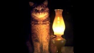 ⭐ Живые обои Lamp and Cat 720p | Скачать бесплатно | На рабочий стол ⭐