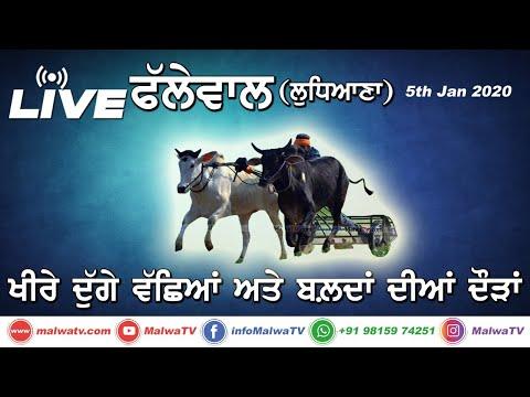 PHALLEWAL (Ludhiana) OX RACES - BULL CART RACES [05-Jan-2020]    LIVE STREAMED VIDEO