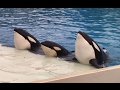 Killer Whale Educational Presentation at SeaWorld San Diego (10/27/16)