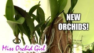 Major orchid haul! - Schwerter orchids and some others
