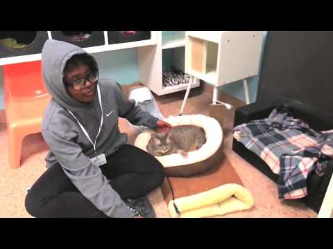 Pennsylvania SPCA Humane Education - Virtual Shelter Tour!