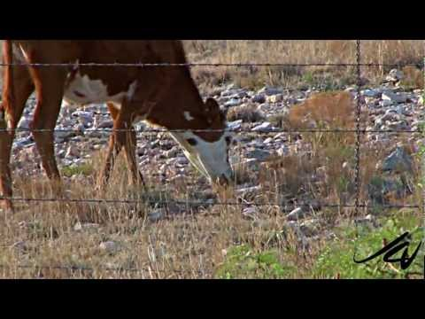 Brownfield, Texas - Black Gold, Ranches and Cotton - YouTube Travel