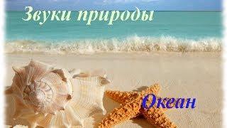 Звуки природы. Океан(Звуки природы. Океан -------------------------------------------- Больше о Здоровье и Красоте ☛ http://bogatstvaprirodi.ru/ Присоединяйтес..., 2014-03-25T12:37:48.000Z)
