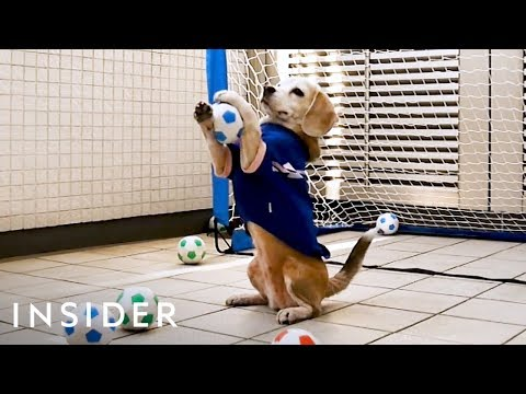 Kevin Johnson - Purin The Pup Is An Excellent Goalie