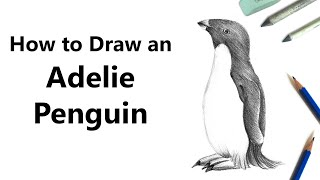 How to Draw an Adelie Penguin with Pencil [Speed Drawing]