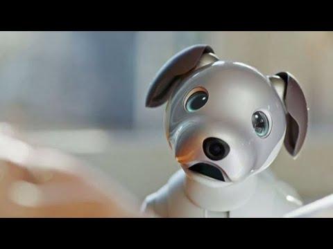 Aibo el perro robot