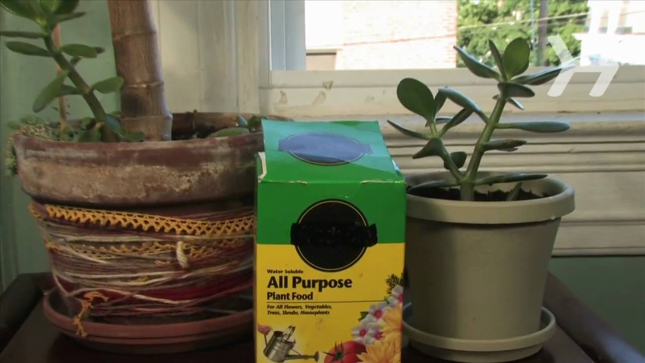 How To Make Your Own House Plant Food