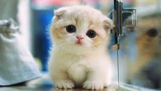 Những chú mèo đáng yêu nhất thế giới 2018 - phần 2 -  MEOMEOTV ✔