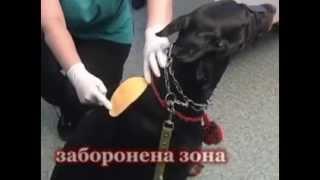 Куда нужно делать укол (инъекцию) собаке