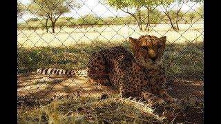 Animals of Namibia: Part III