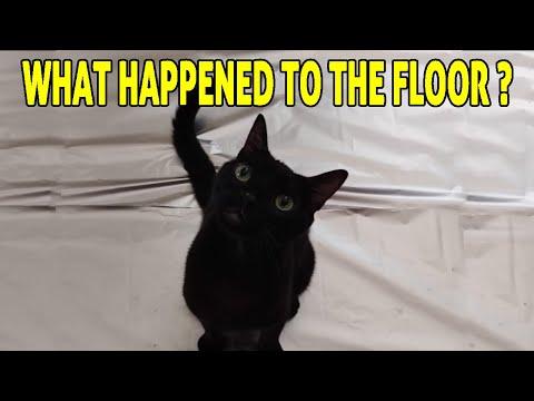 Cats Vs Foil | Do Cats Walk On Foil?