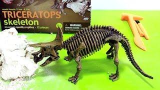Dinosaur toy skeleton fossil excavation | Esqueleto de dinosaurio juguete para excavar | 玩具恐龍 - 5/7