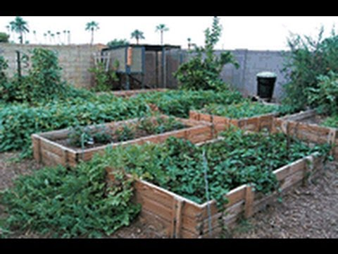 Secrets to a successfull urban garden with little work.