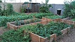 Secrets to a successfull urban garden with little work.