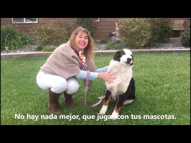 Invitación semana Let´s have fun Pumahue Chicureo