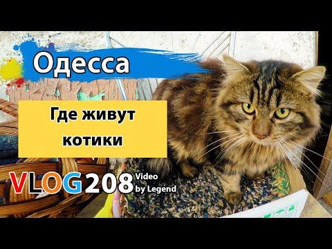 Бесчисленные коты из женского монастыря в Одессе | Глазами туриста