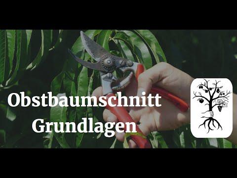 Obstbaumschnitt Grundlagen Wuchsgesetze Schnittwirkung Tipps