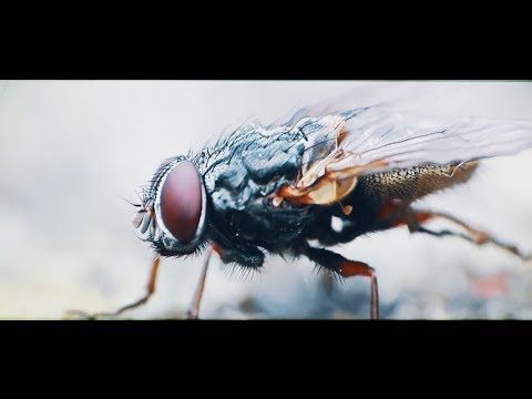 Cane Hill - Lord of Flies (Official Music Video)
