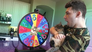 SPIN THE CAT WHEEL! *ADOPTING A NEW CAT*