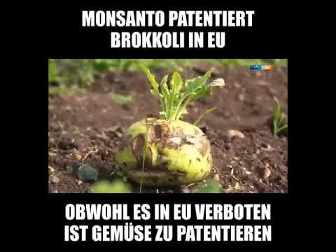 Monsanto Patent Lizenzgebühren Für Brokkoli?