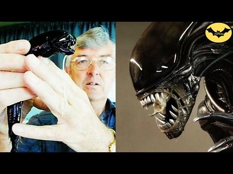 """Top 5 """"Monstruos"""" De Películas Que Existen En La Vida Real."""