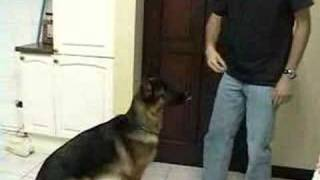Adam Katz On Dog Training For Teaching Your Dog How To Down