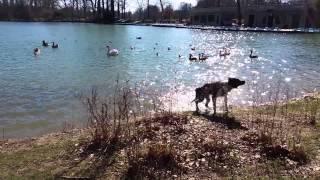 Souvenir Lyon attaque chien