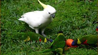 Visiting Kuala Lumpur Bird Park, Zoo in  Kuala Lumpur, Malaysia