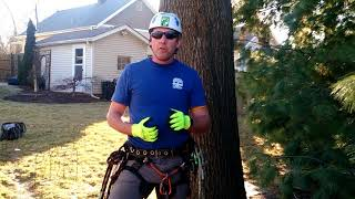 When is the best time of year to prune my trees?