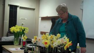 Grooming Daffodils for Show