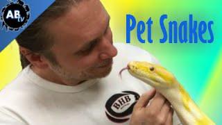 What Pet Snake Should I Get? SnakeBytesTV - Ep. 389 : AnimalBytesTV
