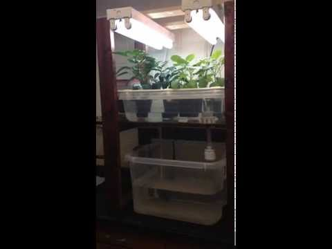 The Benchtop Aquaponic System