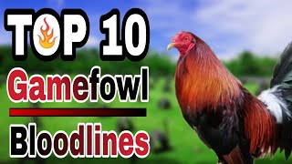 TOP 10 GAMEFOWL BLOODLINES
