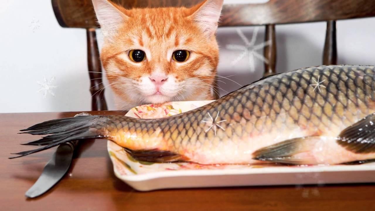 Сазан польза и вред // сазан полезные свойства //калорийность сазана жареного, рыба сазан