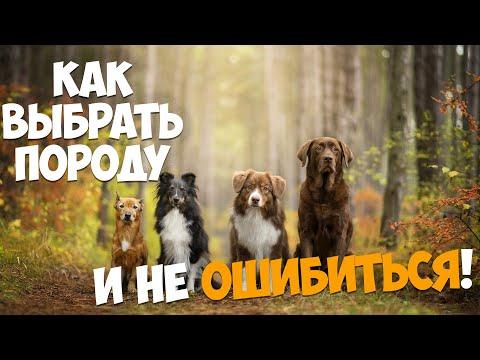 Вопрос: Какую породу собаки лучше выбрать?