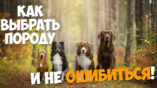 выбираем породу собаки, которая вам подойдет.